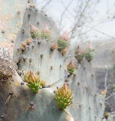 Ridge Descent (Maria Sciandra) Tags: cactus texture mexico flora sanmigueldeallende botanicalgarden elcharcodelingenio mariasciandraphotography nikond7200