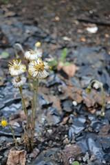 Make a wish (miranda.valenti) Tags: flower dandelion wish rubble offfocus