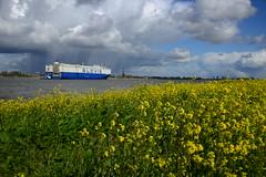 Glovis Challenge (larry_antwerp) Tags: port ship belgium belgi vessel antwerp tug schelde  antwerpen  sleepboot schip                     pctc            9541708  glovischallenge antwerptowage fairplayxiv        9590591