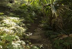 Sublime Point, NSW. (Jacob Ramsay) Tags: nature point rainforest fuji path australia lookout nsw sublime wollongong escarpment illawarra xpro1