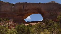 Wilson Arch (r a y  b r o w n) Tags: arch arches canyonlandsnationalpark canyonlands wilson joewilson