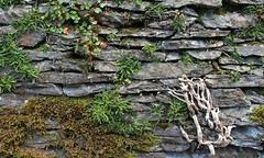 Nature's wall (rreyn92) Tags: wood plants lake colour nature wall rocks natural district over taking variation biological association rockery freshwater mosses varieties