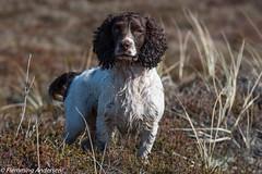 FAN_9606.jpg (Flemming Andersen) Tags: dogs water animal denmark seaside spring outdoor hund dk hurup lodbjerg northdenmarkregion bedstedthy helligsvej hebojebi