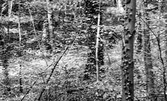 Cyclist in the Woods (John fae Fife) Tags: blackandwhite bw monochrome luxembourg xe2 fujifilmx