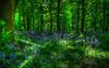672838 (johnshin1) Tags: trees sky house garden nationaltrust hdr merseyside spekehall