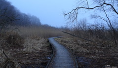 (alpros) Tags: sweden schweden skandinavien naturereserve sverige scandinavia nordeuropa northerneurope uppland naturreservat stockholmsln fysingen sigtunakommun