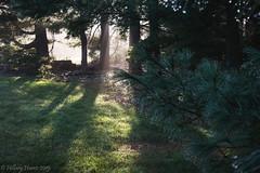 IMG_1938 (hillarycharris) Tags: morning trees mist nature fog sunrise canon landscape outdoors foggy tamron morningmist naturephotography morningfog mistymorning treesinfog foggytrees foggylandscape sunrisephotography treesinmist mistylandscape canonrebelt5 canoneost5