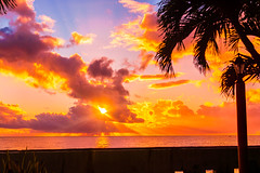 DPH_2773 (king_hawke2) Tags: ocean pink blue light sunset sea sky orange sun tree beach nature water colors beautiful beauty clouds landscape island paradise bright vibrant palm vibrance glisten