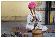 Charmer (msankar4) Tags: pink india art snake carving jaipur rajah citypalace goldentriangle pinkcity rajastan bookseller folksy snakecharmers rajputs princelystate rajastanart