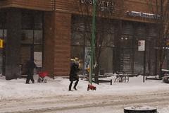 Snowstorm Jonas-13 (Diacritical) Tags: snow brooklyn iso800 pattern jonas blizzard 70 f50 2470mmf28 0ev nikond4 nikoncorporation sec secatf50 douglascpalmer2014 january232016 snowstormjonas