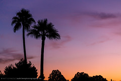 Neighborhood | Peoria, Arizona (sublimephotography.ca) Tags: sunset arizona sky colors palmtrees peoria silouettes travelphotography sublimephotography mattszymkow