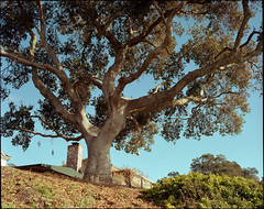 Santa Cruz (westkauai) Tags: california santacruz takumar lookingup portra400 pentax6x7 colornegativefilm 75mmlens photoworkssf