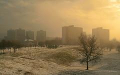 Jan 8: Misty January Morning in City (johan.pipet) Tags: winter mist snow tree fog clouds canon dark landscape europe flickr eu slovensko slovakia suburb palo zima bratislava sneh bartos mesto koprivnica mraky dubravka hmla dbravka barto