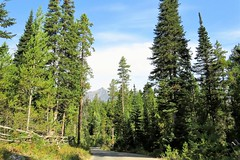 Road Crossing (Patricia Henschen) Tags: mountains moose jackson wyoming grandtetons tetons preserve naturepreserve grandtetonnationalpark moosewilsonroad laurancesrockefellerpreserve