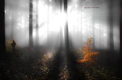 El resplandor (Jabi Artaraz) Tags: trees rboles gorgeous bosque zb fotgrafo haya mendia abeto basoa pagoa euskoflickr superaplus aplusphoto jabiartaraz jartaraz