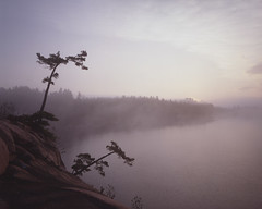 Sunrise over George Lake, Killarney, Prov. Park (martinspix) Tags: morning trees sun white mist lake ontario canada film water rock misty fog pine sunrise early rocks north lakes foggy canadian killarney northern leaning pinetrees largeformat leaningtree canadianshield leaningtrees