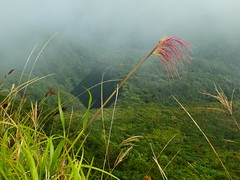 Cloudy view from Mount Hibok-Hibok, Camiguin (ydcheow87) Tags: mist volcano asia cloudy philippines lookout mount summit camiguin mindanao hibokhibok