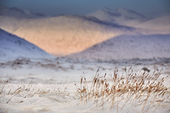 Late Afternoon Sun, Glencoe Mountain Resort (mark_mullen) Tags: winter snow mountains cold nature landscape scotland highlands scenery scottish highland glencoe grasses shallowdepthoffield snowsports canon24105f4 glencoemountainresort canon5dmk3 markmullenphotography