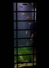 2 (David Somerville 123) Tags: fish lights fishtank phonebox luminaire