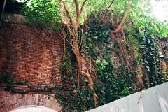 160206024 (Emptiless) Tags: tree 35mm vintage nikon taiwan taipei    d700