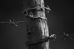 strangling nature (paulraybouldphotography) Tags: wood nature fence outdoors wire post steel border safety sharp barbedwire secure barb protection barbwire barbed confinement