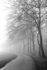 Sometimes we need the fog to remind ourselves that all of life is not black and white (CarolienCadoni..) Tags: road trees blackandwhite mist netherlands fog foggy nederland groningen february sal2470z sonyslta99