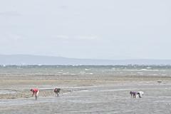 Familia mariscando. (vlΛиco iиvierиo) Tags: chile patagonia beach familia playa 7d verano cannon mariscando