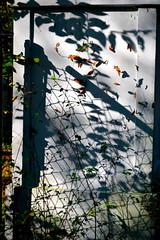 shadow (donjuanmon) Tags: red orange white black green yellow shadows fences hff fencedfriday donjuanmon
