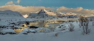 Super-Fresh Snow & Cool Arctic Gold