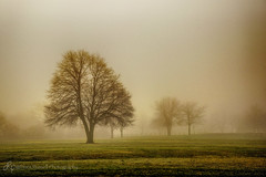 Foggy Morning (d_russell) Tags: tree green grass weather fog fence ef24105mmf4 canon5dmarkiii