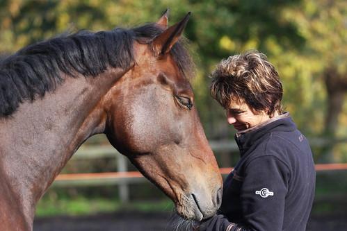Horses Insight  (22)