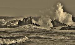 Pt. Pinos At Sunrise (Michael T. Morales) Tags: bw montereybay wave pacificgrove ptpinos