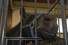 Hey there (Stuart MacNeil) Tags: horse animals stable