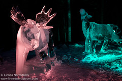 Ice Art - Moose
