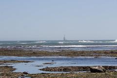 IMG_3724 (armadil) Tags: beach beaches mavericks californiabeaches