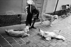 Vita da... cani! (sirio174 (anche su Lomography)) Tags: dog como dogs cane cani