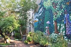 Hope Steven Garden (Trish Mayo) Tags: garden mural communitygarden hamiltonheights thebestofday gnneniyisi