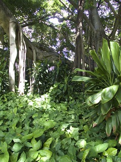 Brisbane, Jardins botaniques