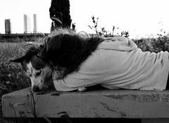 Beloved husky (Marta Paredes) Tags: madrid espaa dog white black blanco canon spain husky y negro perro monocromtico 600d
