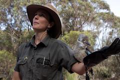 Kookaburra (alistairh) Tags: australia ki kookaburra kangarooisland alistairbhall raptordomain