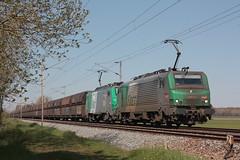 BB 27093 + BB 27082 / Morbecque (jObiwannn) Tags: train locomotive prima fret ferroviaire