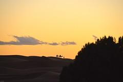 "sundown erg chebbi (Archer's Eye) Tags: archerseye archerkelly morocco love berber allrightsreserved home ""archers eye"" ""archer kelly"" sahara"