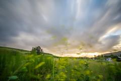 Day 99: Wind (adamsarasin) Tags: flowers sunset sky field grass clouds landscape long exposure wind supershot