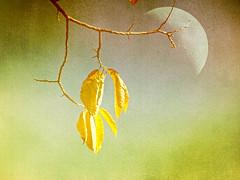 Autumn series (Nick Kenrick.) Tags: autumn moon fall magicunicornverybest