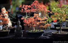 2016_04_10_st_jean_de_beauregar455 (Xavier_Claise) Tags: saint jean bokeh jardin fte horticulture dcoration ouverture plantes 135mm beauregard artisanat 2016 135mmf2 5dmarkiii