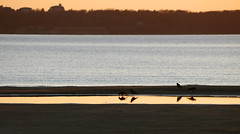 Linnud (Jaan Keinaste) Tags: sea reflection bird nature evening estonia pentax meri lind eesti loodus k3 htu peegaldus pentaxk3