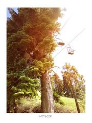 Trees (Badmon Chuks) Tags: bear sunlight ski tree pine big oak flare slopes