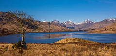 Early Morning, Loch Arklet (Sarah-86) Tags: morning sky mountains tree water landscape scotland spring scenery trossachs lonetree munro locharklet nikond810