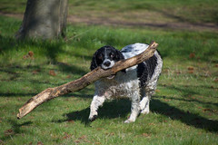 Who's a good boy? (cuppyuppycake) Tags: park boy dog pet tree green grass nikon branch good stick wanstead fetch d7200