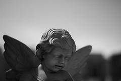 IMG_5157 (NoZe_Hobby_Ph) Tags: angel